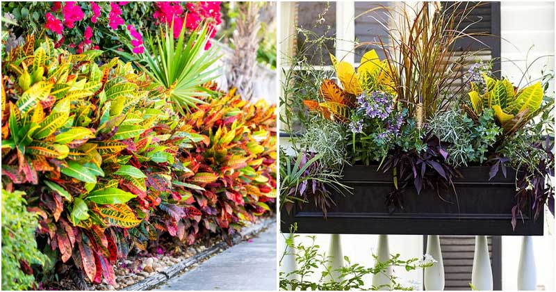 18 Eye-catching Landscaping Inspirations with Croton Plant