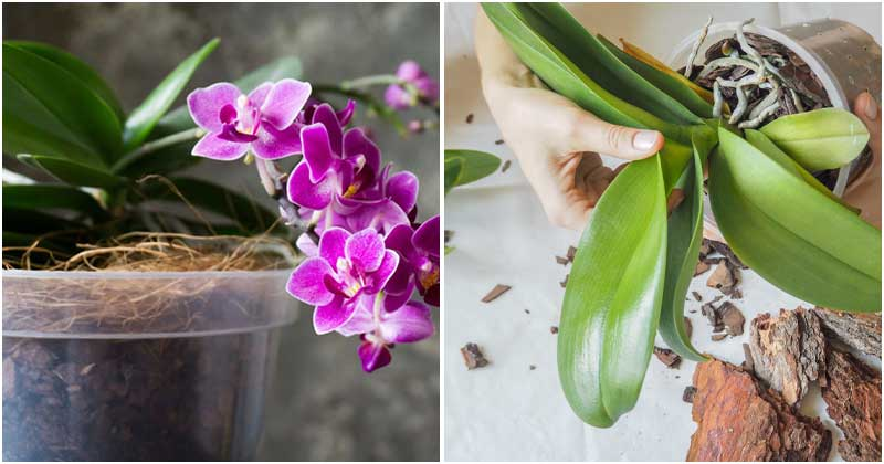 15 Popular Mistakes When Growing Orchids You Should Avoid