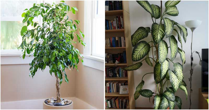 13 Houseplants That Grow Fast And Tall