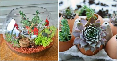 Collection of The Cutest DIY Indoor Gardening Ideas