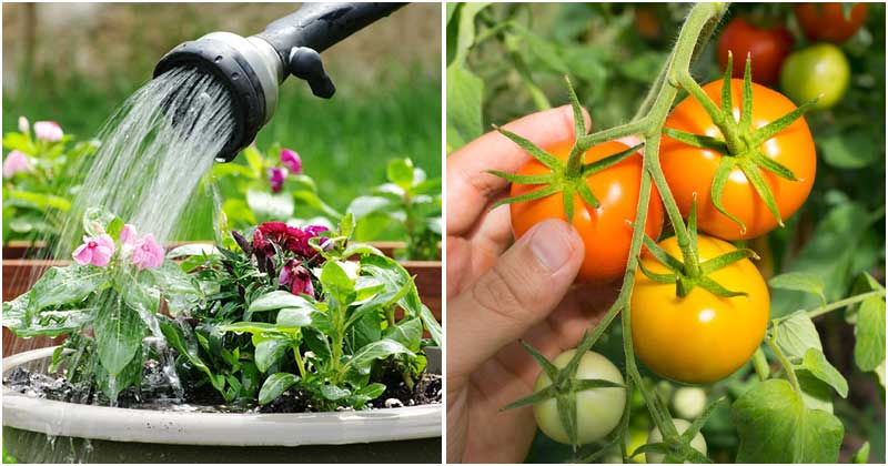 9 Great Ways to Help Your Plants Deal With Heat Stressed In Summer