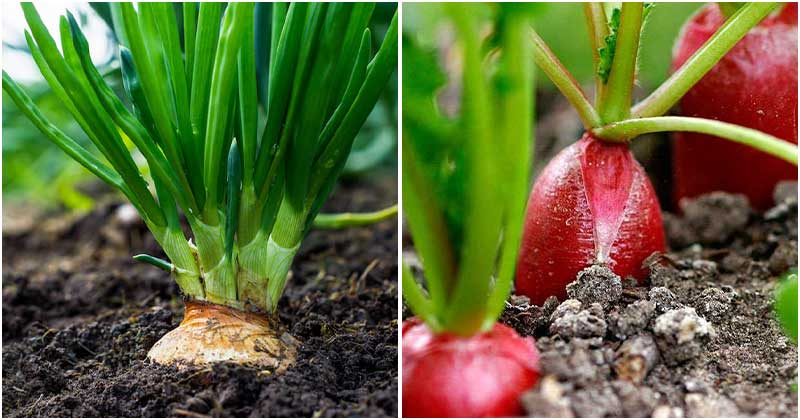 10 Carrot Companion Plants To Support Its Growth