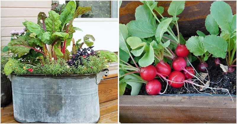 Top 11 Best Vegetables That Can Grow Well In Containers