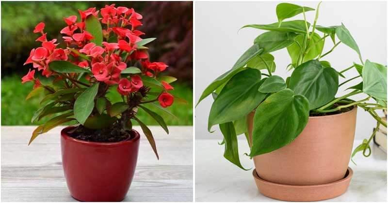 Stunning Houseplants According to 12 Zodiac Signs