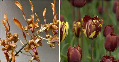 14 Best Beautiful Varieties of Brown Flowers