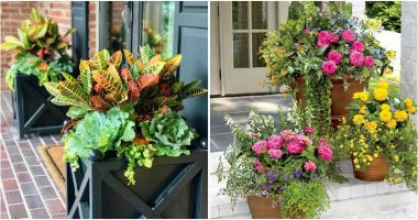 20 Beautiful Plants To Decorate For Patio And Porch