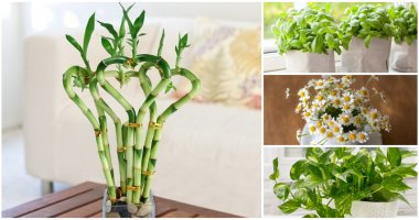 12 Lucky Houseplants And Herbs For Your Kitchen
