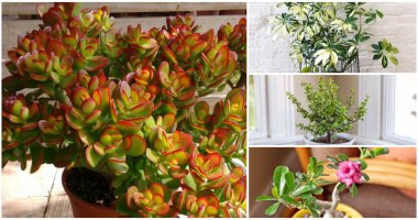 13 Exciting And Unusual Dwarf Trees Like Houseplants To Grow In Your Home