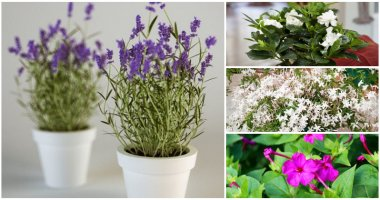 12 Indoor Plants That Have Fragrant To Make Fresh Air