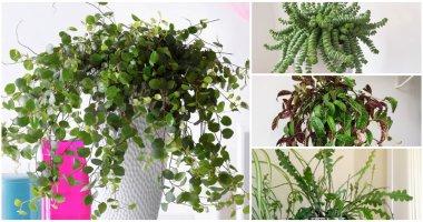 10 Unique Indoor Vines and Climbing Plants