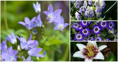 13 Best Beautiful Purple And White Flowers