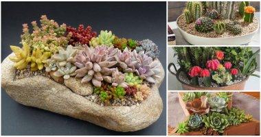 Amazing DIY Cactus And Succulent Dish Garden