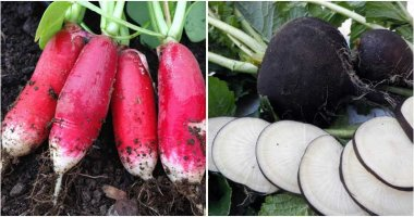 20 Different Types of Radishes To Grow In Containers