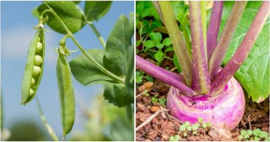13 Vegetables Grow In Autumn For A Harvest In Spring