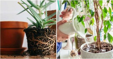 7 Most Common Houseplant Problems You Should Know To Keep Them Growing Healthy
