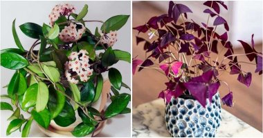 21 Beautiful Houseplants To Grow In East Facing Windows