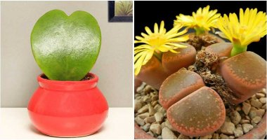 12 Lovely and Romantic Houseplants That Can Be Used As Gifts
