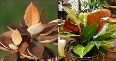 18 Gorgeous Plants That Have Shape Look Like Be Made of Copper