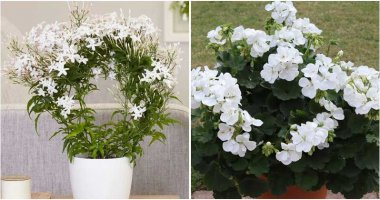 13 Beautiful Houseplants That Have White Flowers