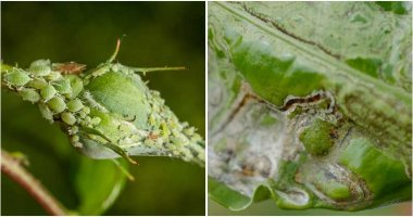 10 Houseplant Pests And Ways To Control Them