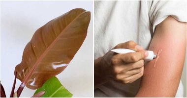 Amazing Coconut Oil Uses For The Home And Garden